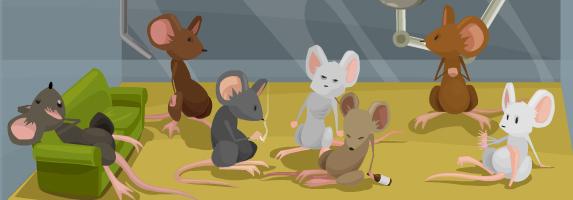 mice on drugs